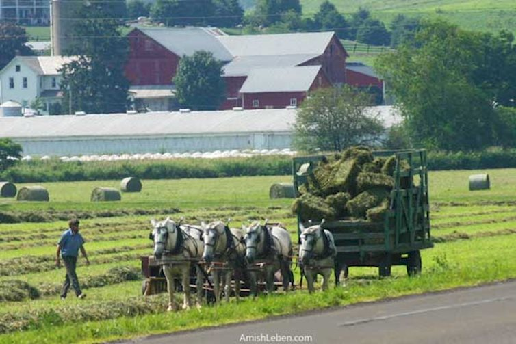 Amish Leben Llc